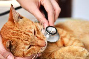 Comment soigner un cancer chez un chat ?